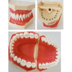 Módulo Tipodonto  (A32 diente) sin articulador